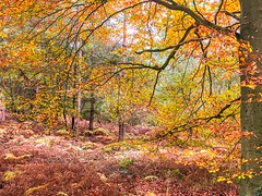Cannock Chase Forests, Cannock, England