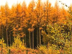 Cannock Chase Forest, Cannock, England