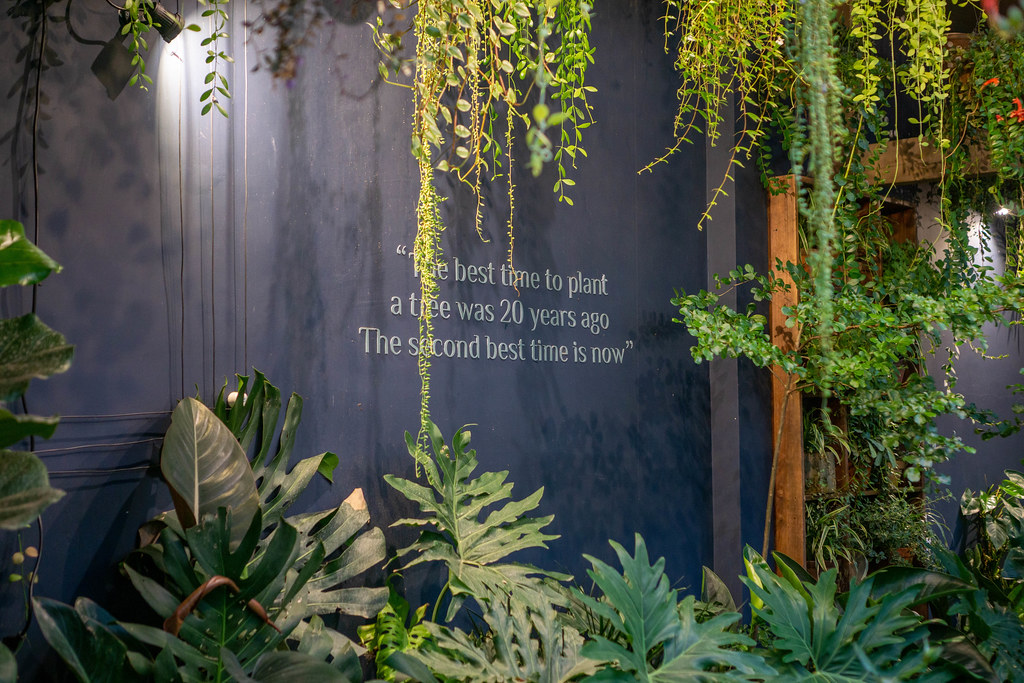 Quote 'The best time to plant a tree was 20 years ago. The second best time is now' on a Wall with many Plants around it