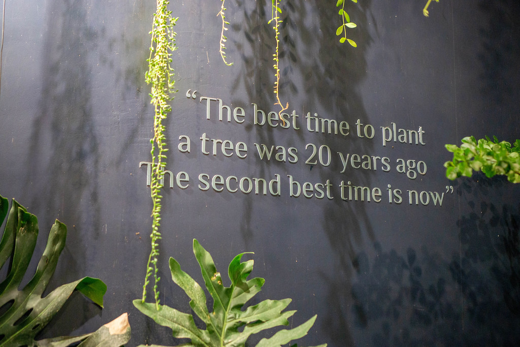 Der Spruch 'The best time to plant a tree was 20 years ago. The second best time is now' an einer Wand mit Pflanzen