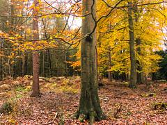 Cannock Chase Forest, Cannock Chase, England
