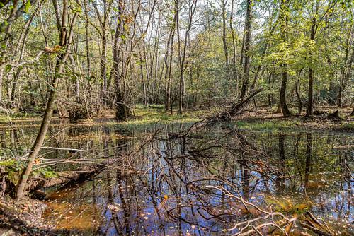 15-Lagune de sous-bois