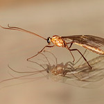 2nd - PDI League 2 - Ichneumon Wasp on Glass by Trevor Chapman