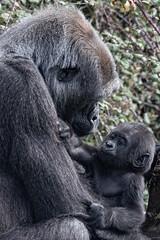 Monkey baby - Photo of Savigné