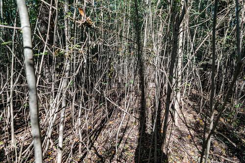 10-Forêt dense