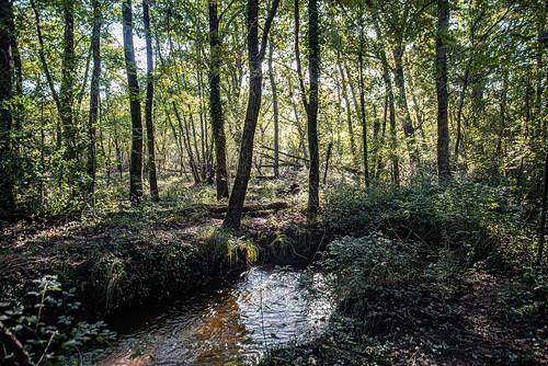 03-Ruisseau du Moulin de Lugos