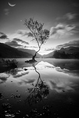 The Lone Tree in Wales