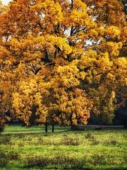 Herbstlich.