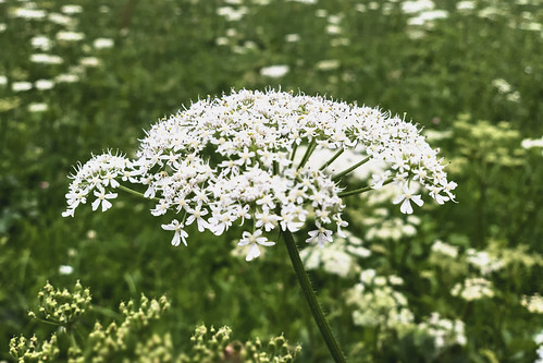 Flower in field