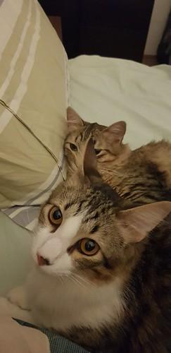 Gatos e gatinhos