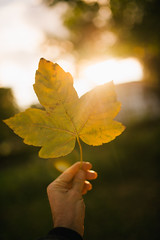The man holds a yellow leaf in the park with sun background.