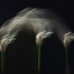 Dancing Callas by Eric Cheek