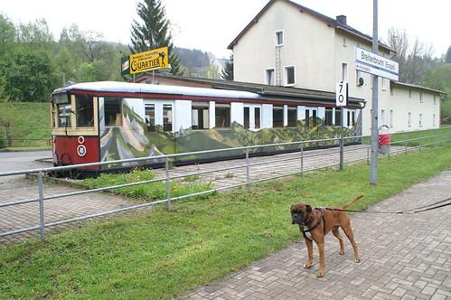 Boxer Oscar voor het voormalig station Breitenbrunn in het Erzgebirge  een voormaile S-Bahn van Berlijn 21-05-2010