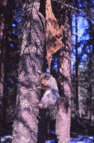 Oravan matkanpää, IKs Kuukausi kilpailu