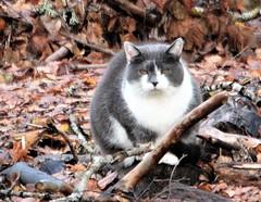 Staring cat