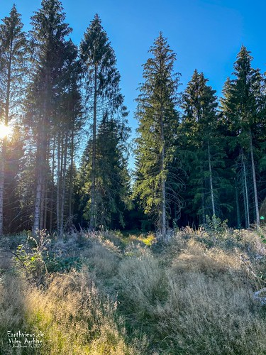 Der deutsche Wald (II)