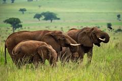 Kidepo Elephants