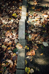 Falling leaves on a concrete walkway in the park.