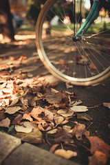 Bicycle wheel on a concrete walkway in the park covered with falling leaves.