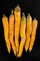 Ripe raw yellow carrots on dark background