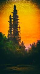 Twilight Scene with Stream and Redwood Trees