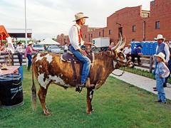Man on Steer, Fort Worth Stockyards, 1993