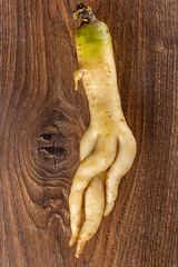 Arracacha white carrot on wooden background