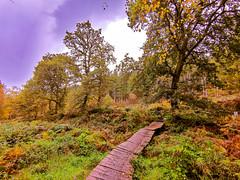 Rainbow Valley, Cannock Chase, England