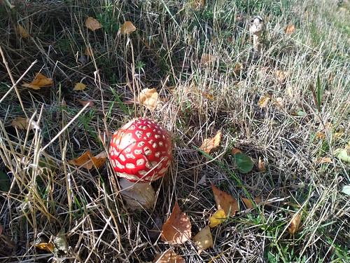 scary mushrooms...