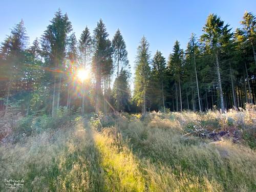 Der deutsche Wald (III)