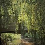 The Secret Bridge by Patricia Reid