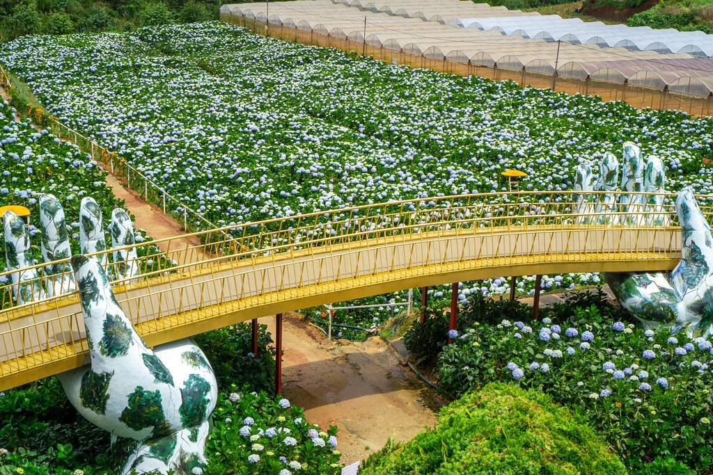 Golden Hand Bridge Copy at Hydrangea Flower Garden in Da Lat, Vietnam
