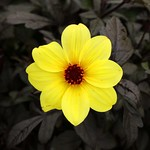 Floral Contrast by Rob Draper