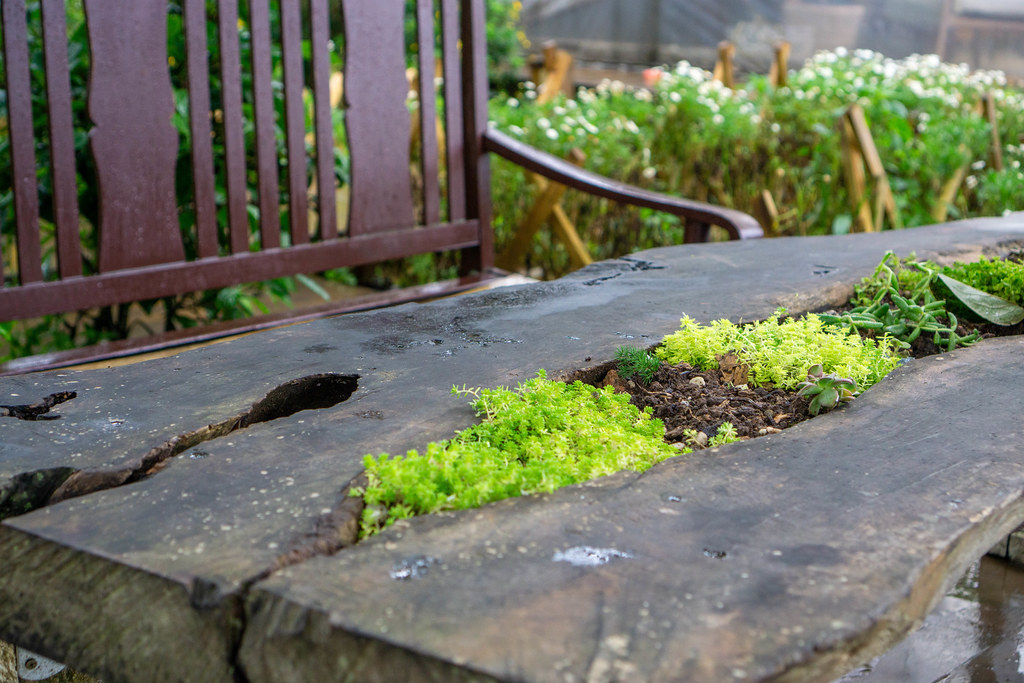 Plants growing out of a Wooden Table in an Outdoor Cafe in Dalat, Vietnam