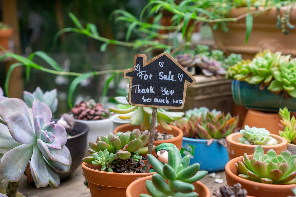 Small Indoor Plants with For Sale Signboard on a Wooden Table