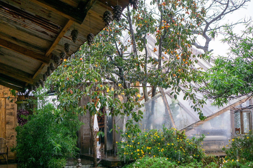 Rain dropping from Roof of Cafe with many Plants and Trees