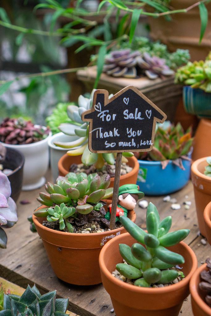 Nahaufnahme von kleinen Zimmerpflanzen in Töpfen  mit Verkaufsschild
