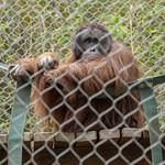 LA Zoo Grifith Park Oct 22 2020-442