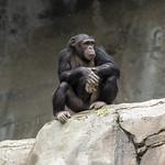 LA Zoo Grifith Park Oct 22 2020-399