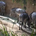 LA Zoo Grifith Park Oct 22 2020-351