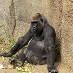 LA Zoo Grifith Park Oct 22 2020-342
