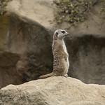 LA Zoo Grifith Park Oct 22 2020-309