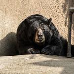 LA Zoo Grifith Park Oct 22 2020-471