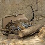 LA Zoo Grifith Park Oct 22 2020-448