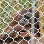 LA Zoo Grifith Park Oct 22 2020-435