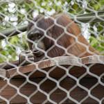 LA Zoo Grifith Park Oct 22 2020-428