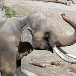 LA Zoo Grifith Park Oct 22 2020-424
