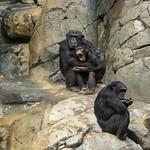 LA Zoo Grifith Park Oct 22 2020-406