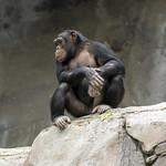 LA Zoo Grifith Park Oct 22 2020-398