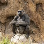 LA Zoo Grifith Park Oct 22 2020-337